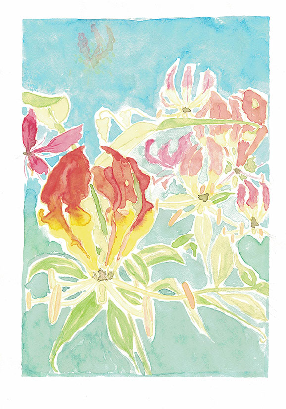 Flame.Lily.1.small