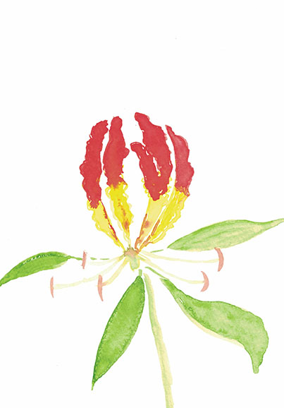 Flame.Lily.2.small