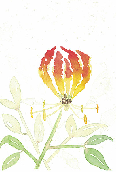 Flame.Lily.3.small